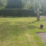 Hedges and lawns 2