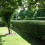 Hedge & Grass Cutting