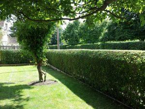 Hedge & Grass Cutting