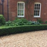 Hedge Cutting Buxus
