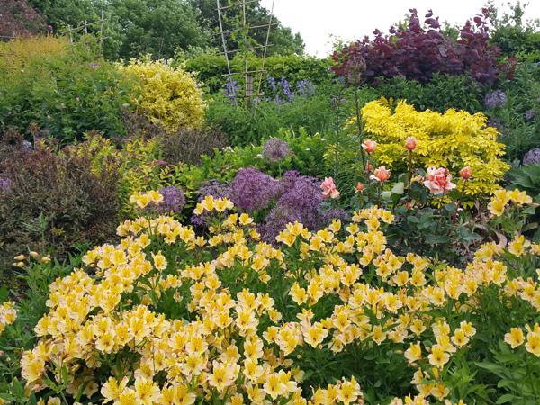 Perennial Garden 6