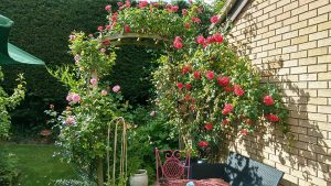 Roses On Arch
