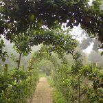Apple Arch Walkway