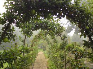 Apple Arch Walkway