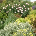 Perennial Garden 8