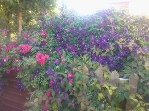 Plants on Trellis